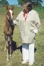 BETEL (Guds Hus) chestnut colt, born 1994-05-20, by Bogardt out of Bint Smyrna by Pomar